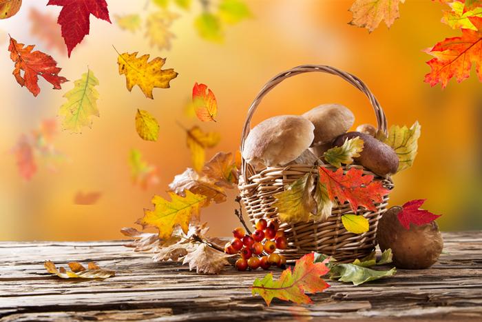秋のゆらぎ肌対策を! 肌を健やかに保ってくれる秋の旬食材とは